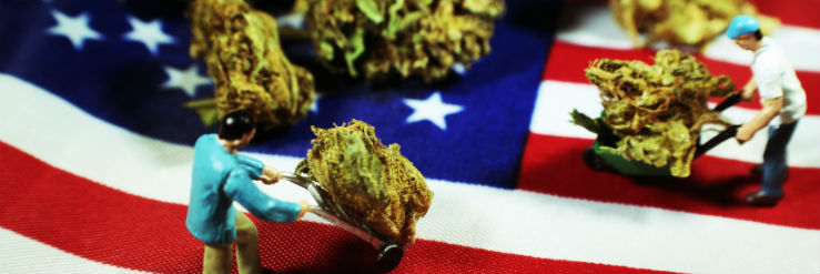 cannabis-usa
