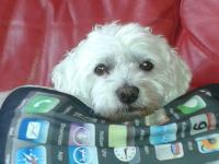 Social-Trading-Hund Idefix